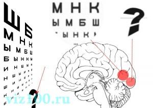 VisioTuning мозг поведение