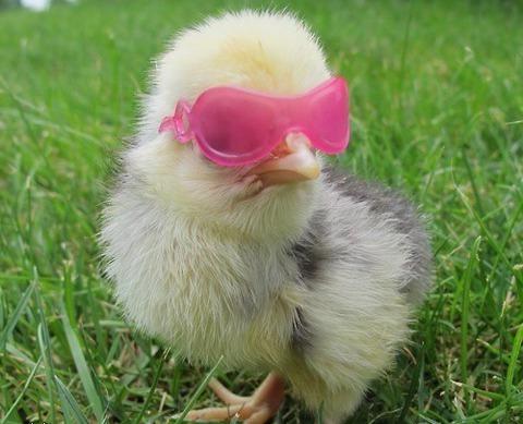 sun_chicken_visiotuning
